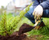 Što najviše šteti biljkama u vašem vrtu?