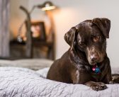 5 najprikladnijih pasmina pasa za obitelji s djecom