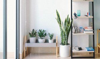 Biljke za stan