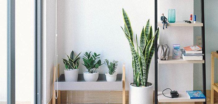 Kako izabrati biljke za stan?